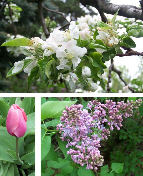 Flowers in MN