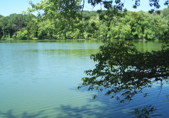 Radnor Lake 3